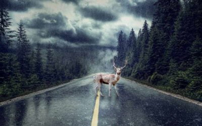 Fall Driving Hazards – wildlife on the roads and weather